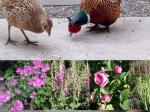 garden-summer-14