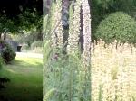 garden-summer-15