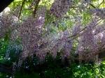 garden-spring-05