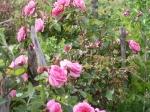garden-spring-21