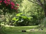 garden-april2016-22