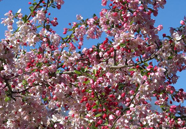 garden-spring-06
