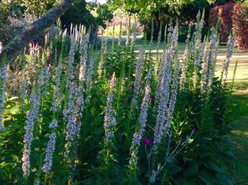 garden-summer-12